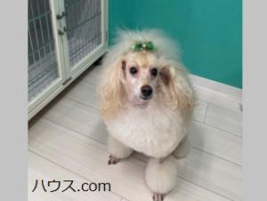カルモナの看板犬